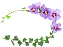 Floral frame from hibiscus flowers Stock Photo