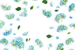 Floral frame of hydrangea flowers and leaves on white background. Flat lay, top view. Floral background. Floral frame of hydrangea flowers and leaves on white stock photos
