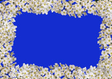 Floral frame isolated Royalty Free Stock Image