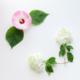 Floral frame with ivy, hibiscus and hydrangea flowers.  Top view Stock Image