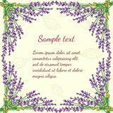 Floral frame with lavender Stock Photography