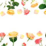 Floral frame made of orange roses flowers and rose petals on white background. Valentines day. Flat lay, top view. Floral frame made of orange roses flowers and stock images