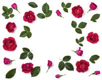 Floral frame made of pink rose flowers, buds and leaves isolated on white background. Flat lay. Top view stock photography