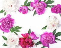 Floral frame made of pink and white peony flowers and leaves isolated on white background. Flat lay. Top view stock images