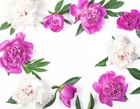 Floral frame made of pink and white peony flowers and leaves isolated on white background. Flat lay. Top view stock photo