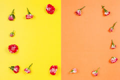 Floral frame made of roses on yellow and orange background. Flat lay, top view. Royalty Free Stock Photography