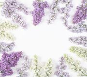 Floral frame made of spring lilac flowers isolated on white background. Top view with copy space. Flat lay Stock Images