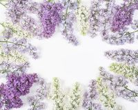 Floral frame made of spring lilac flowers isolated on white background. Top view with copy space. Flat lay royalty free stock photography