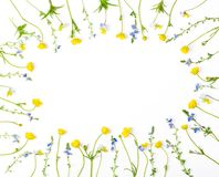Floral frame made of yellow buttercups flowers and pansies isolated on white background. Top view. Flat lay. Floral frame made of yellow buttercups flowers and royalty free stock photos