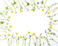 Floral frame made of yellow buttercups flowers and pansies isolated on white background. Top view with copy space. Flat lay royalty free stock images