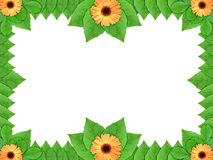 Floral frame with orange flowers and green leaf Stock Photo