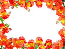 Floral frame with orange flowers and green leaf Stock Image