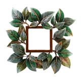 floral frame photo Στοκ Εικόνες