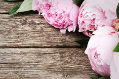 Floral frame with pink peonies. On wooden background Stock Photography