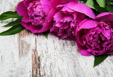 Floral frame with pink peonies Royalty Free Stock Images