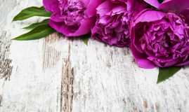 Floral frame with pink peonies Royalty Free Stock Photography