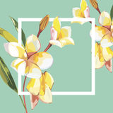 Floral frame with Plumeria flowers on light background. Greeting card or template for wedding`s Day design. EPS 10 Royalty Free Stock Photography