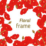 Floral frame of red blooming poppies Royalty Free Stock Images