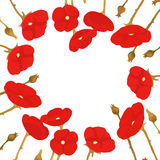 Floral frame of red poppies, blooming poppies Stock Image