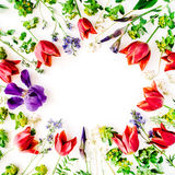 Floral frame with red tulips, yellow flowers, purple iris, branches, leaves and petals isolated on white background Royalty Free Stock Photos