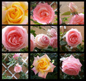 Floral Frame Retro Lovely Rose In Decorative Frame Vintage Style Royalty Free Stock Images