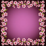 Floral frame, sakura blossom background, vector Royalty Free Stock Image