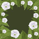 Floral frame in the shape of a circle. Vector illustration Royalty Free Stock Photo