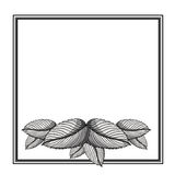 Floral frame square decoration. Vector illustration design Royalty Free Stock Images