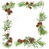 Floral frame Thuja branches cones Christmas background Stock Photos