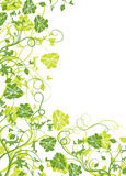 Floral frame, vector Royalty Free Stock Images