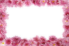 Floral frame on white Royalty Free Stock Image
