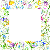Floral frame of a wild flowers and herbs on a white background. Buttercup,cornflower,clover,bluebell,forget-me-not,vetch,timothy grass,lobelia,snowdrop flowers Stock Photo