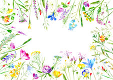 Floral frame of a wild flowers and herbs on a white background. Buttercup, cornflower,clover,bluebell,forget-me-not,vetch,timothy grass,lobelia,snowdrop flowers royalty free illustration