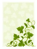 Floral frame with willow and green leaf Royalty Free Stock Photo