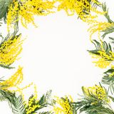 Floral frame with yellow flowers branches on white background. Flowers for woman day. Flat lay, top view. Floral frame with yellow flowers branches on white stock photos