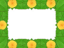 Floral frame with yellow flowers and green leaf Stock Photography