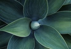Floral freen le modèle Photos stock