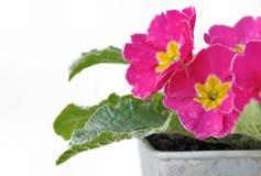 Floral freshness Stock Image