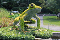 Floral Frog Stock Image