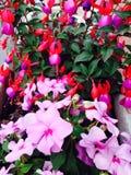Floral with fuchsia Stock Photos