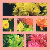Floral garden stock images