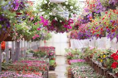 Floral Garden Nursery Stock Images