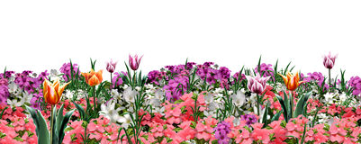 Floral garden web banner Royalty Free Stock Image