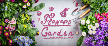 Floral gardening background with variety of colorful garden flowers and tools , handwritten Text flowers garden on concrete backgr Royalty Free Stock Image