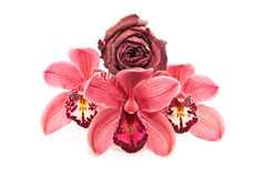 A Floral Gift Stock Images