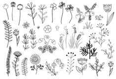 Floral graphic elements big vector set. Herbs and flowers vector illustration