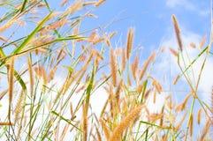 Floral grass against cloudy sky. Blue sky Stock Photos
