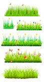 Floral grass Stock Image