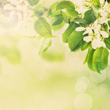 Floral green background Stock Images