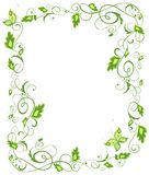 Floral green border Stock Images